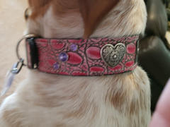 Pit Bull Gear VN2 - 1 1/2 Personalized Diablo Hearts & Gems Leather Collar Review