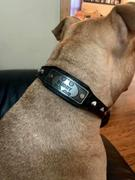 Pit Bull Gear BAT1 - 1 Batman w/Name Cone Studded Leather Collar Review