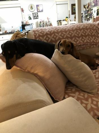 Alpha Paw Wiener Squad Pillow Review