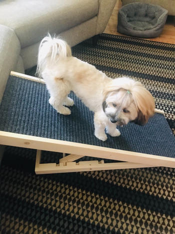 Alpha Paw DachRamp Review