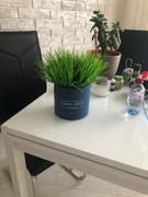 Hansel & Gretel Green Artificial Grass Plant Review