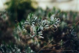 Lensbaby Velvet 28 Review