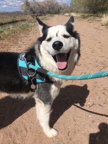 USA MADE ADJUSTABLE DOG HARNESS ADJUSTABLE HEAVY DUTY 1 Year Warranty