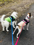 Joyride Harness World's Best Dog Harness Review