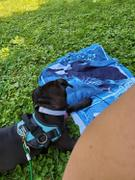 Joyride Harness Camo Dog Harness Review