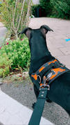 Joyride Harness Blue Plaid Harness Review