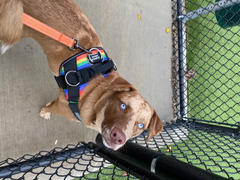 Joyride Harness Rainbow Dog Harness Review