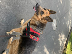 Joyride Harness Red Hearts Dog Harness Review