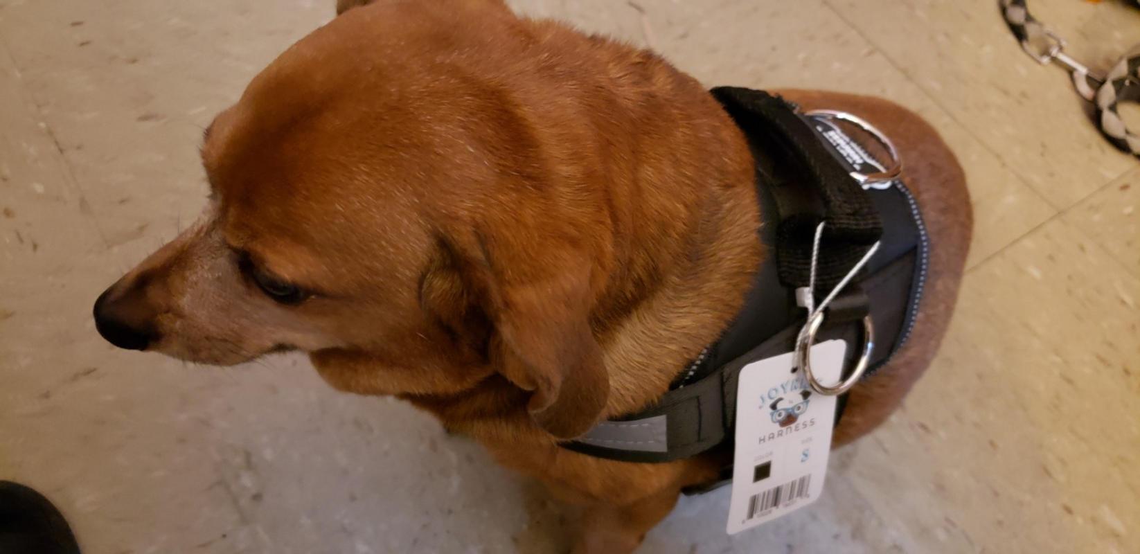 Heavy Duty Dog Leash  U2013 Joyride Harness