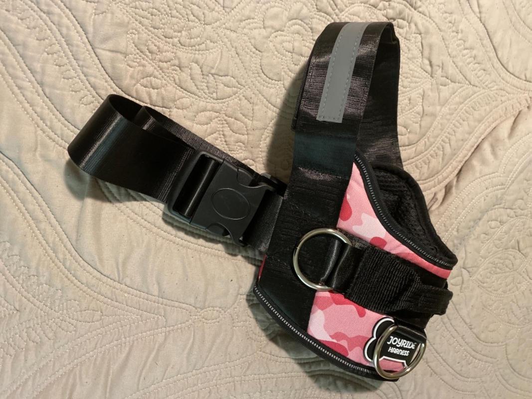 Double Dog Leash  U2013 Joyride Harness