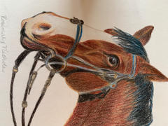 Ann Kullberg Bay Horse Colored Pencil Project Kit Review