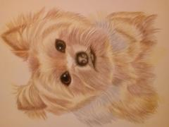 Ann Kullberg Yorkie Colored Pencil Project Kit Review