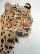 Ann Kullberg Leopard: In-Depth Colored Pencil Tutorial Review