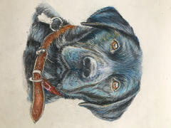 Ann Kullberg Black Lab: In-Depth Colored Pencil Tutorial Review