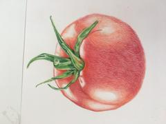 Ann Kullberg Jumpstart Level 1: Ripe Tomato in Colored Pencil Review