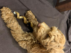 Best Bully Sticks 10-Inch Curly Bully Stick Review