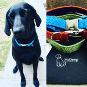My McDawg Mustard and Blue Dog Collars and Leads |Posh Paws Review