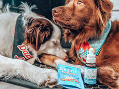 Zen Dogs & Cool Cats 250mg for Dogs & Cats Review