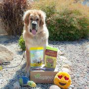 WagWell Box WagWell Monthly Dog Box Review