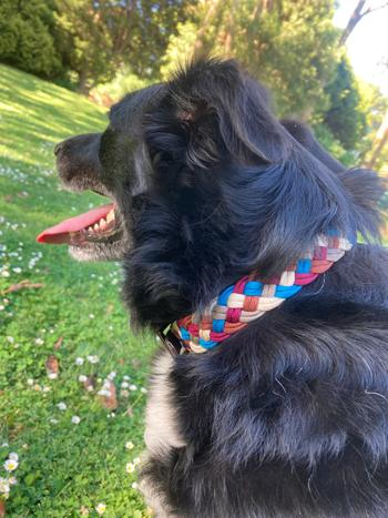 Native Collars Custom River Collar - Your own design! Review
