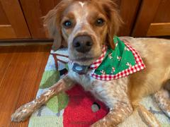 Three Wags The Very Brittany Christmas Dog Bandana Review