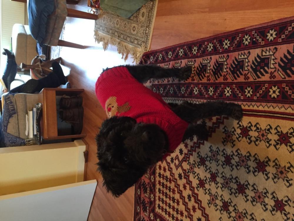 4115 King Cole Knitting Pattern Christmas Dog Coats Double Knit DK