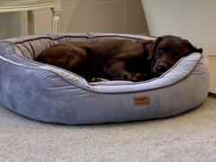 Kazoo Pet Co Bilby Bed Review