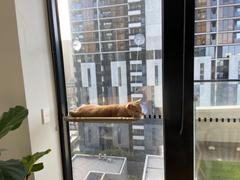 Kazoo Pet Co The Lookout Window Cat Bed Review