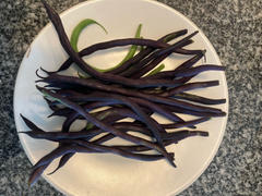Pinetree Garden Seeds Carminat Pole Bean (56 Days) Review