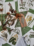 Mudbrick Herb Cottage Herbs and Medicinal Plants Knowledge Cards Review
