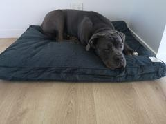 Life of Riley Pet Products Wool Filled Dog Beds Review