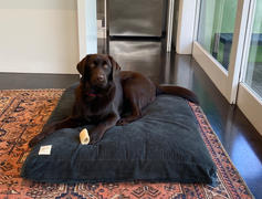 Life of Riley Pet Products Spare Dog Bed Covers Review