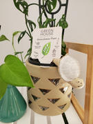 The Chic Nest Turtle Pot Hanger Review