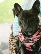 Frenchiestore French Bulldog Harness | Vielseitiges Gesundheitsgeschirr | Ultimative Camo-Bewertung