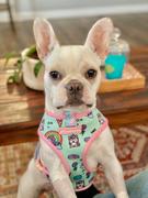 Frenchiestore Frenchiestore تسخير صحة الكلب العكسي | مراجعة UniPup