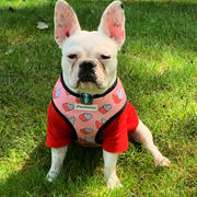Frenchiestore French Bulldog Harness | Vielseitiges Gesundheitsgeschirr | Frenchie Love Review