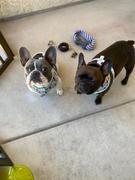 Frenchiestore French Bulldog Pyjamas | Frenchie Kleidung | Eiscreme Bewertung