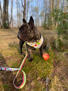 Frenchiestore Frenchiestore Hund Luxusleine | Apple Review