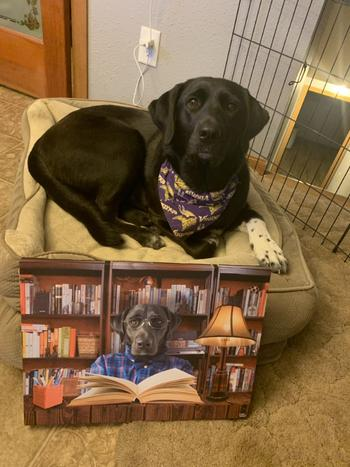 Canvasist Studious Pet Canvas Review