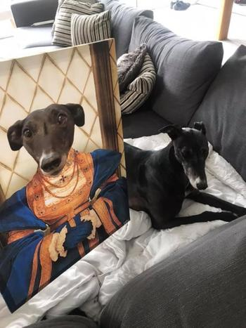 Canvasist Duchess Pet Canvas Review
