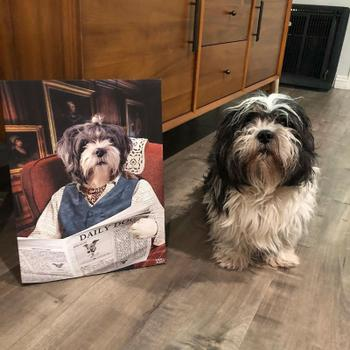 Canvasist English Countryman Pet Canvas Review