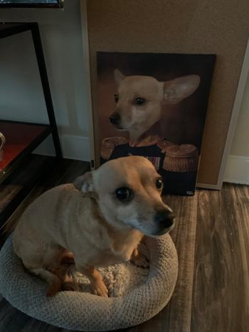 Canvasist The Colonel Pet Canvas Review