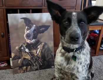 Canvasist Marine Special Force  Pet Canvas Review