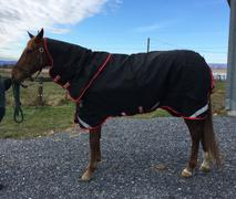 Performance Horse Blankets Rambo Supreme 450g Heavy Vari-Layer Turnout Blanket Review
