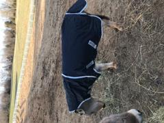 Performance Horse Blankets Amigo Hero 6 Petite Plus Medium Turnout Blanket Review
