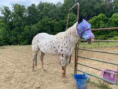 Performance Horse Blankets Kensington Fly Mask with Soft Mesh Ears and Removable Nose Review