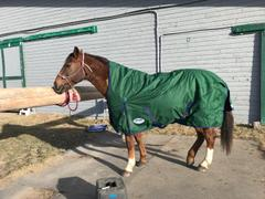 Performance Horse Blankets WeatherBeeta ComFiTec Plus Dynamic High Neck Medium Turnout Blanket Review