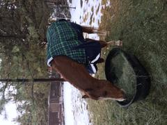 Performance Horse Blankets WeatherBeeta ComFiTec Plus Dynamic Lite Turnout Sheet Review