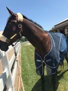 Performance Horse Blankets Rambo Show Net Cooler Review