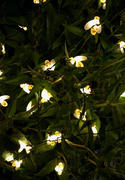 Next Deal Shop Solar-Powered LED Bee String Lights Review